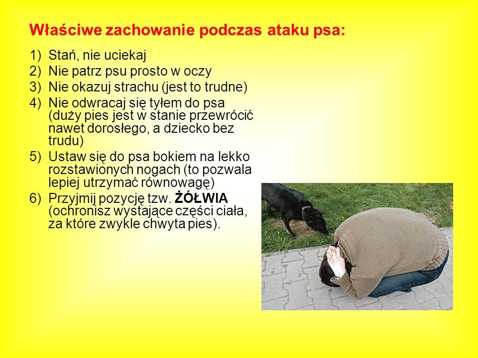 1)Stań, nie uciekaj 2)Nie patrz psu prosto w oczy 3)Nie okazuj strachu (jest to trudne) 4)Nie odwracaj się tyłem do psa (duży pies jest w stanie przew