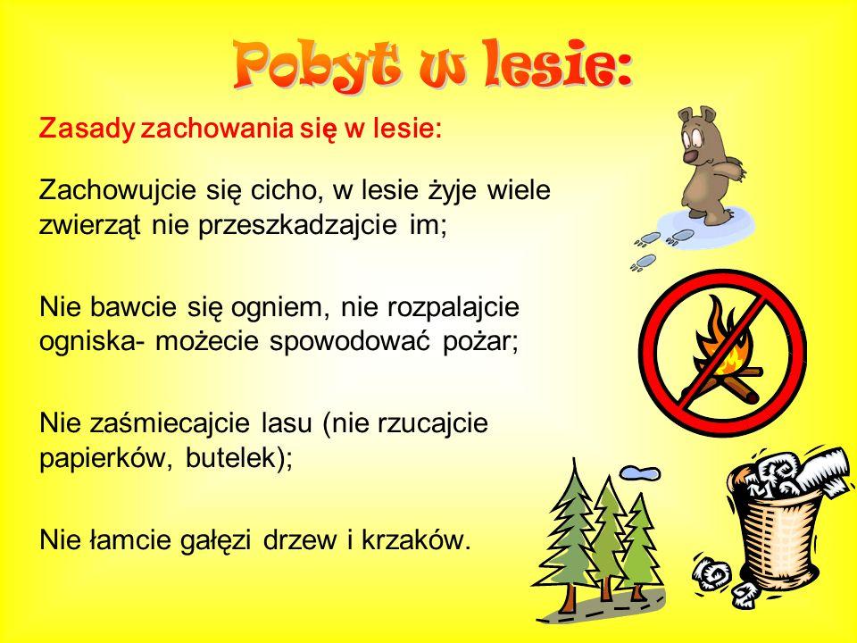 Zasady zachowania si ę w lesie: Zachowujcie się cicho, w lesie żyje wiele zwierząt nie przeszkadzajcie im; Nie bawcie się ogniem, nie rozpalajcie ogni