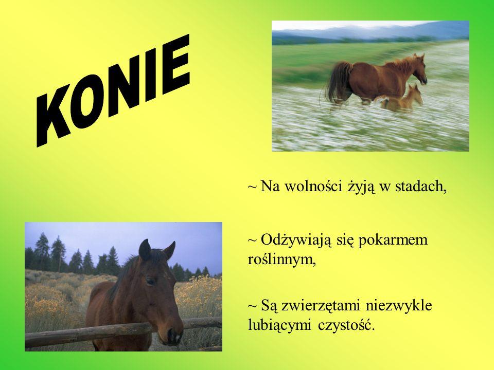~ Na wolności żyją w stadach, ~ Odżywiają się pokarmem roślinnym, ~ Są zwierzętami niezwykle lubiącymi czystość.