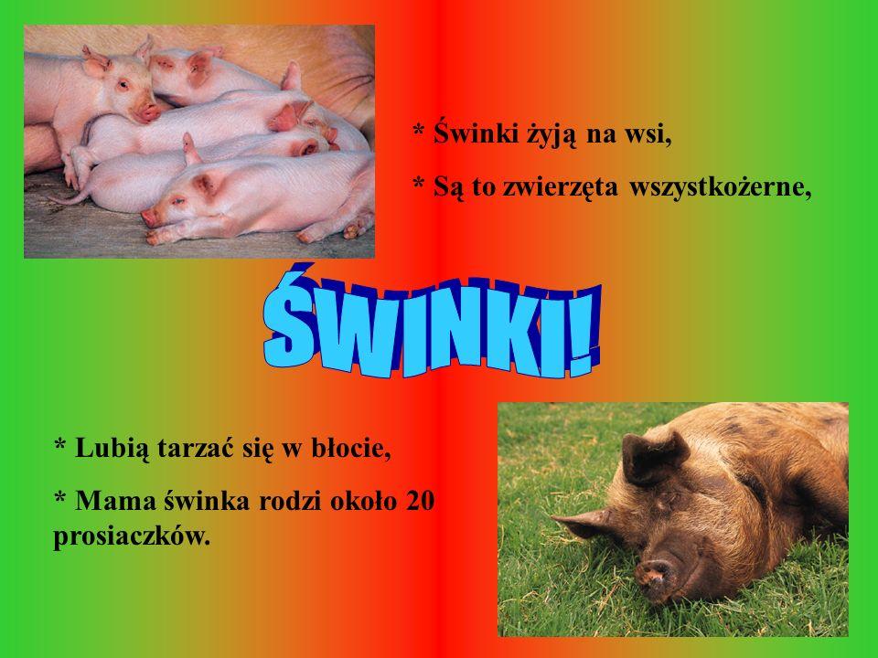 * Świnki żyją na wsi, * Są to zwierzęta wszystkożerne, * Lubią tarzać się w błocie, * Mama świnka rodzi około 20 prosiaczków.