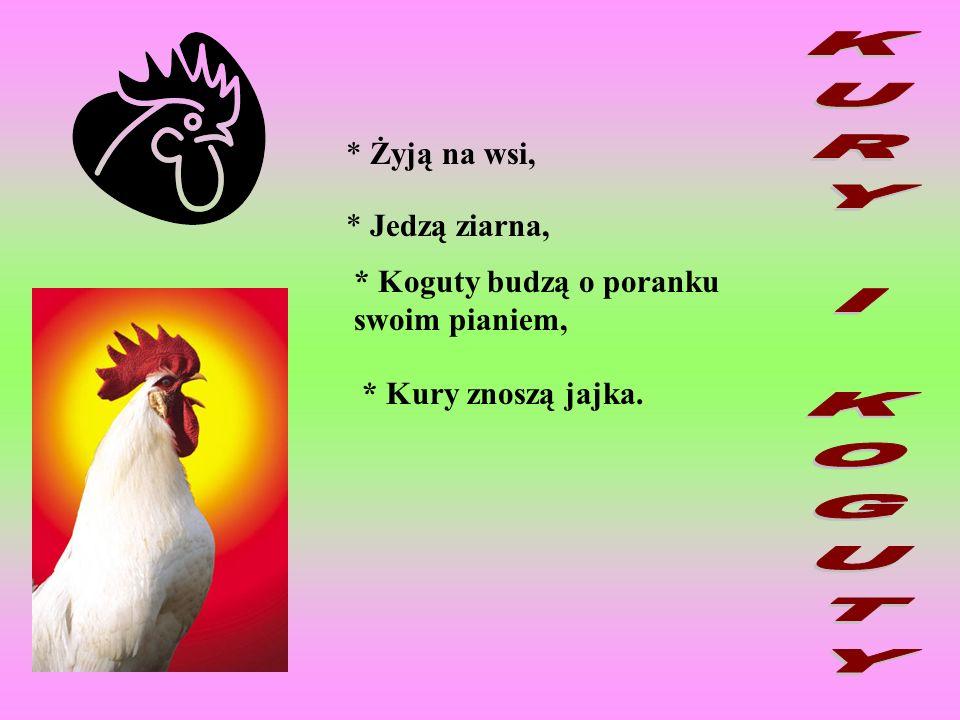 * Żyją na wsi, * Jedzą ziarna, * Koguty budzą o poranku swoim pianiem, * Kury znoszą jajka.