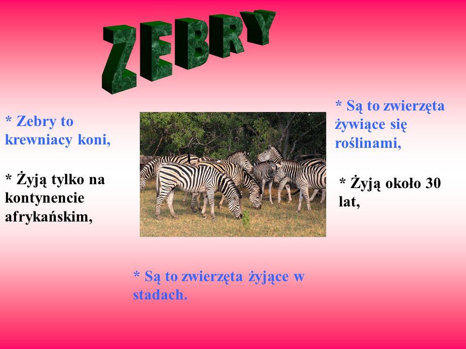 * Zebry to krewniacy koni, * Żyją tylko na kontynencie afrykańskim, * Są to zwierzęta żywiące się roślinami, * Żyją około 30 lat, * Są to zwierzęta ży