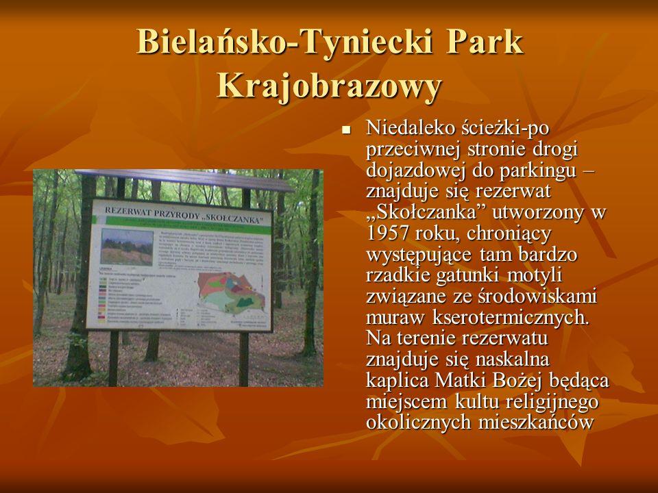 Bielańsko-Tyniecki Park Krajobrazowy Niedaleko ścieżki-po przeciwnej stronie drogi dojazdowej do parkingu – znajduje się rezerwat Skołczanka utworzony