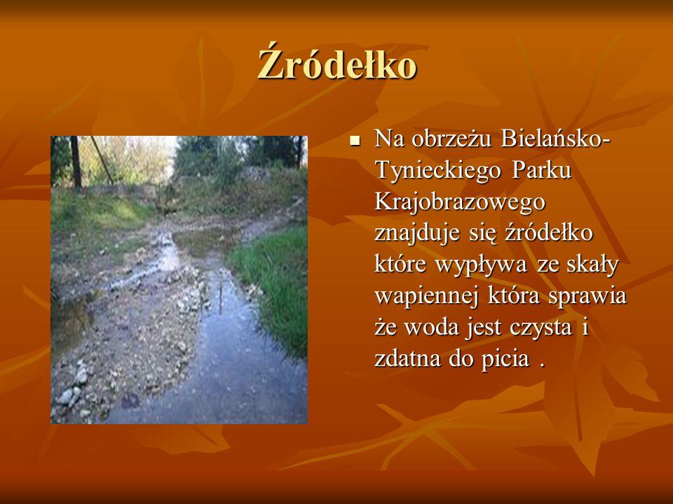 Źródełko Na obrzeżu Bielańsko- Tynieckiego Parku Krajobrazowego znajduje się źródełko które wypływa ze skały wapiennej która sprawia że woda jest czys