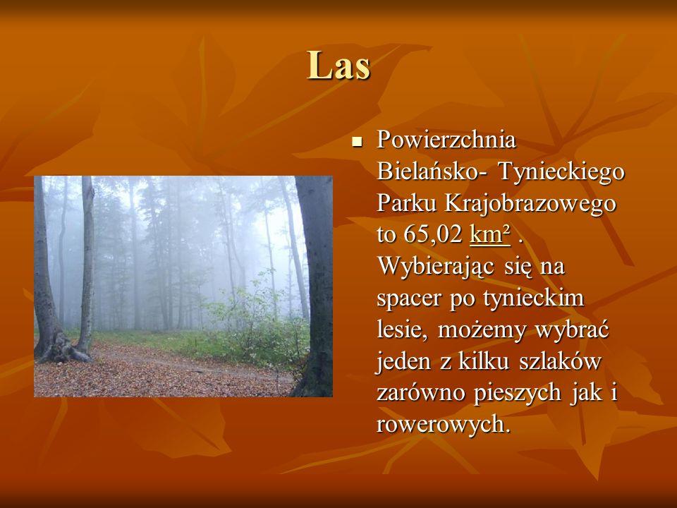 Las Powierzchnia Bielańsko- Tynieckiego Parku Krajobrazowego to 65,02 km². Wybierając się na spacer po tynieckim lesie, możemy wybrać jeden z kilku sz