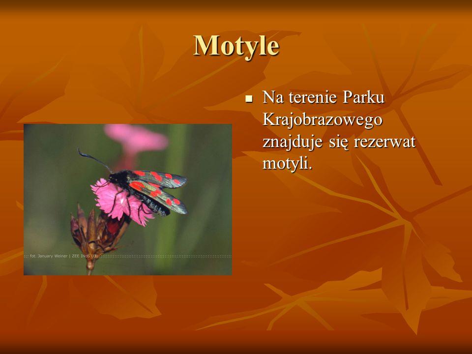 Motyle Na terenie Parku Krajobrazowego znajduje się rezerwat motyli. Na terenie Parku Krajobrazowego znajduje się rezerwat motyli.