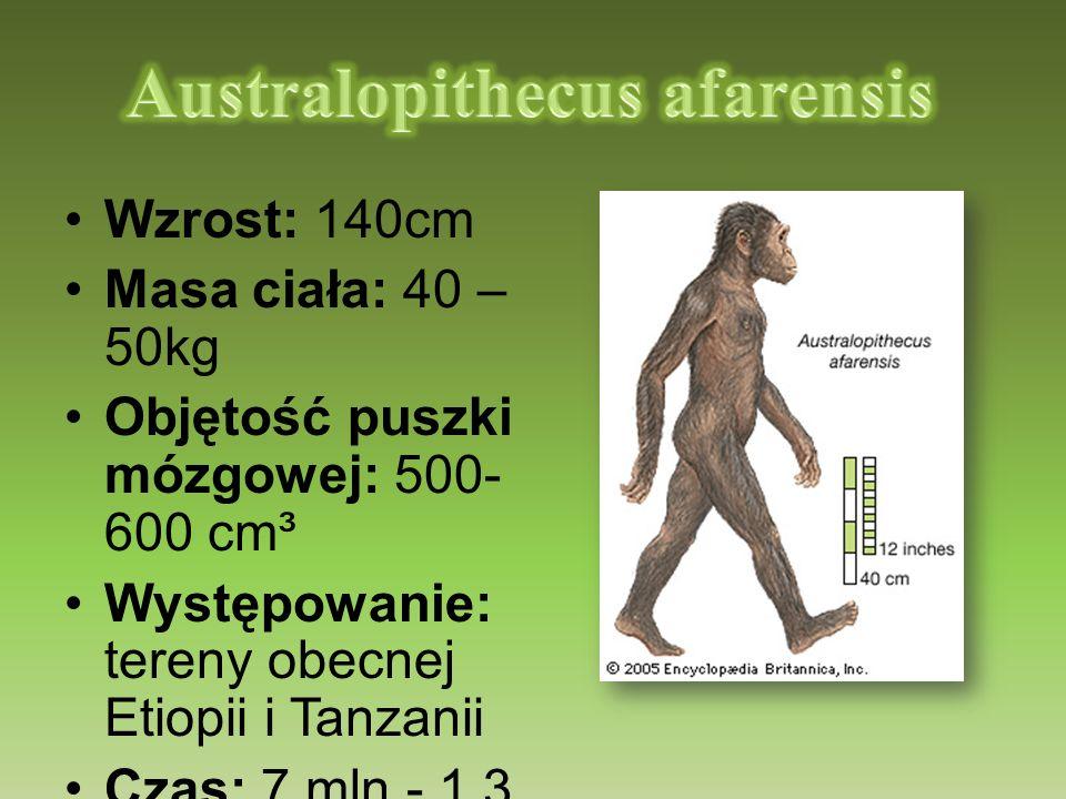Wzrost: 140cm Masa ciała: 40 – 50kg Objętość puszki mózgowej: 500- 600 cm³ Występowanie: tereny obecnej Etiopii i Tanzanii Czas: 7 mln - 1,3 mln lat t