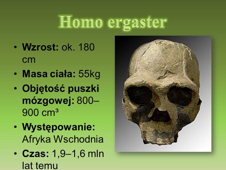 Wzrost: ok. 180 cm Masa ciała: 55kg Objętość puszki mózgowej: 800– 900 cm³ Występowanie: Afryka Wschodnia Czas: 1,9–1,6 mln lat temu