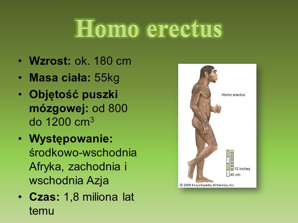 Wzrost: ok. 180 cm Masa ciała: 55kg Objętość puszki mózgowej: od 800 do 1200 cm 3 Występowanie: środkowo-wschodnia Afryka, zachodnia i wschodnia Azja