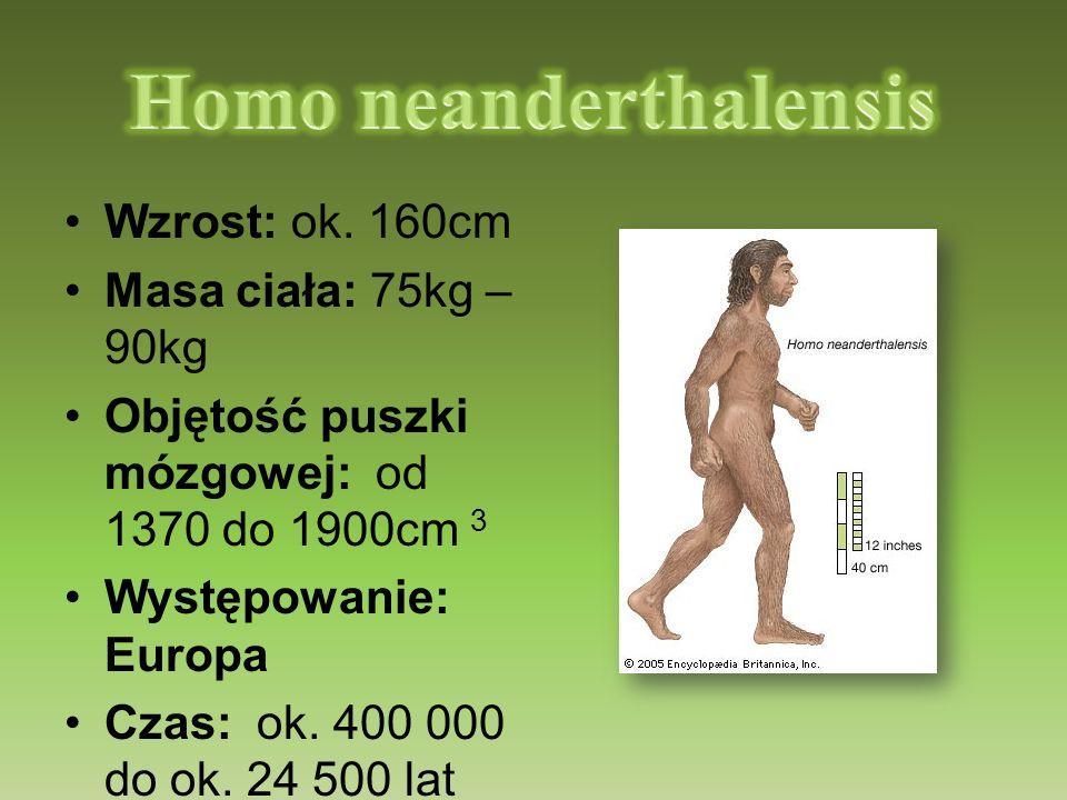 Wzrost: ok. 160cm Masa ciała: 75kg – 90kg Objętość puszki mózgowej: od 1370 do 1900cm 3 Występowanie: Europa Czas: ok. 400 000 do ok. 24 500 lat temu