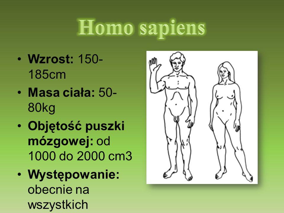 Wzrost: 150- 185cm Masa ciała: 50- 80kg Objętość puszki mózgowej: od 1000 do 2000 cm3 Występowanie: obecnie na wszystkich kontynentach Czas: współcześ