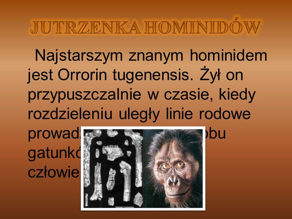 Najstarszym znanym hominidem jest Orrorin tugenensis. Żył on przypuszczalnie w czasie, kiedy rozdzieleniu uległy linie rodowe prowadzące od goryla, ob