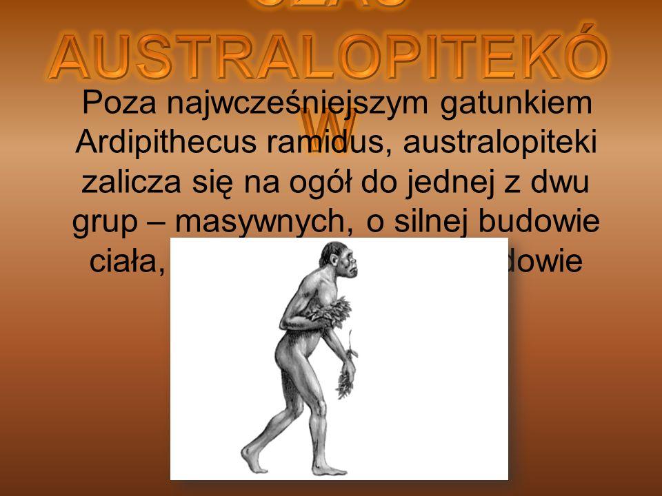 Poza najwcześniejszym gatunkiem Ardipithecus ramidus, australopiteki zalicza się na ogół do jednej z dwu grup – masywnych, o silnej budowie ciała, bąd