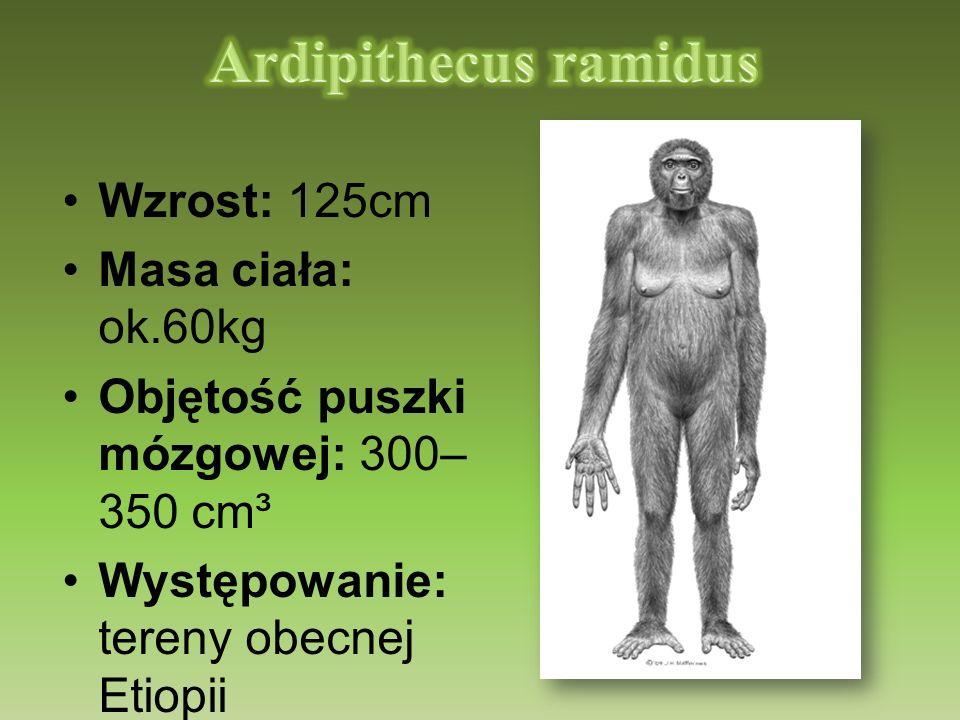 Wzrost: 125cm Masa ciała: ok.60kg Objętość puszki mózgowej: 300– 350 cm³ Występowanie: tereny obecnej Etiopii Czas: ok. 4,4 mln lat temu