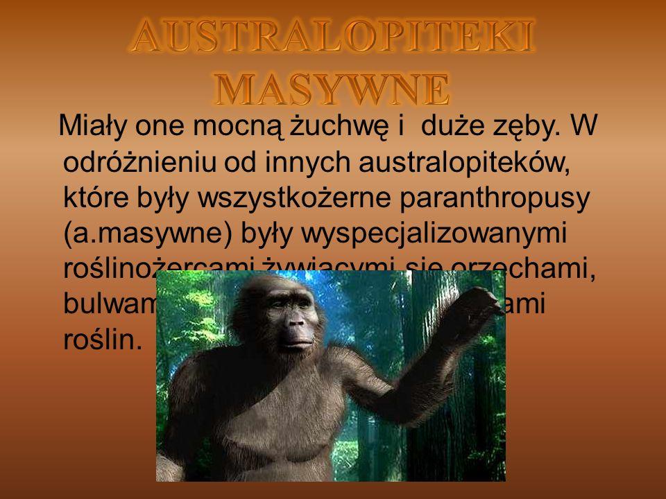 Miały one mocną żuchwę i duże zęby. W odróżnieniu od innych australopiteków, które były wszystkożerne paranthropusy (a.masywne) były wyspecjalizowanym