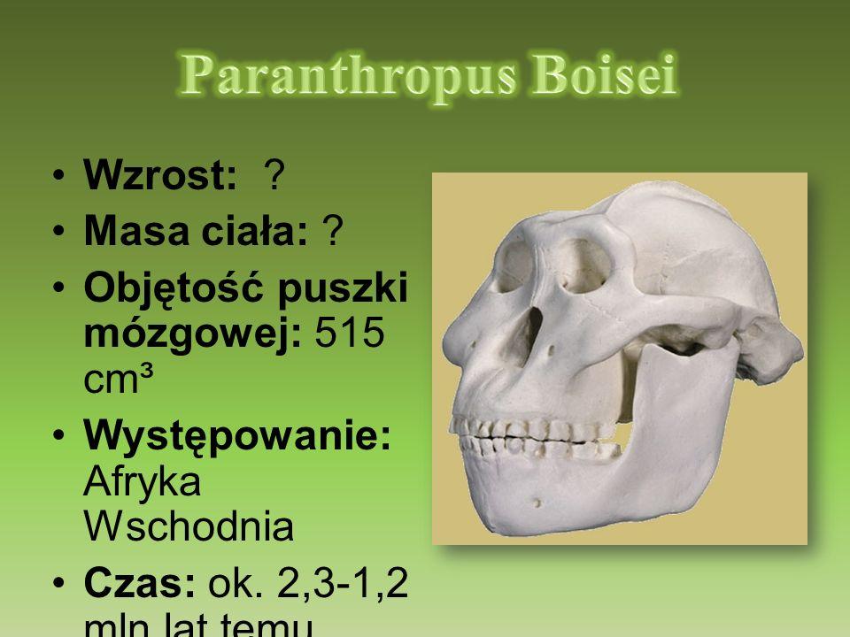 Wzrost: ? Masa ciała: ? Objętość puszki mózgowej: 515 cm³ Występowanie: Afryka Wschodnia Czas: ok. 2,3-1,2 mln lat temu