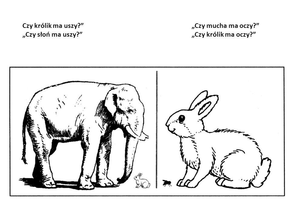Czy królik ma uszy? Czy słoń ma uszy? Czy mucha ma oczy? Czy królik ma oczy?