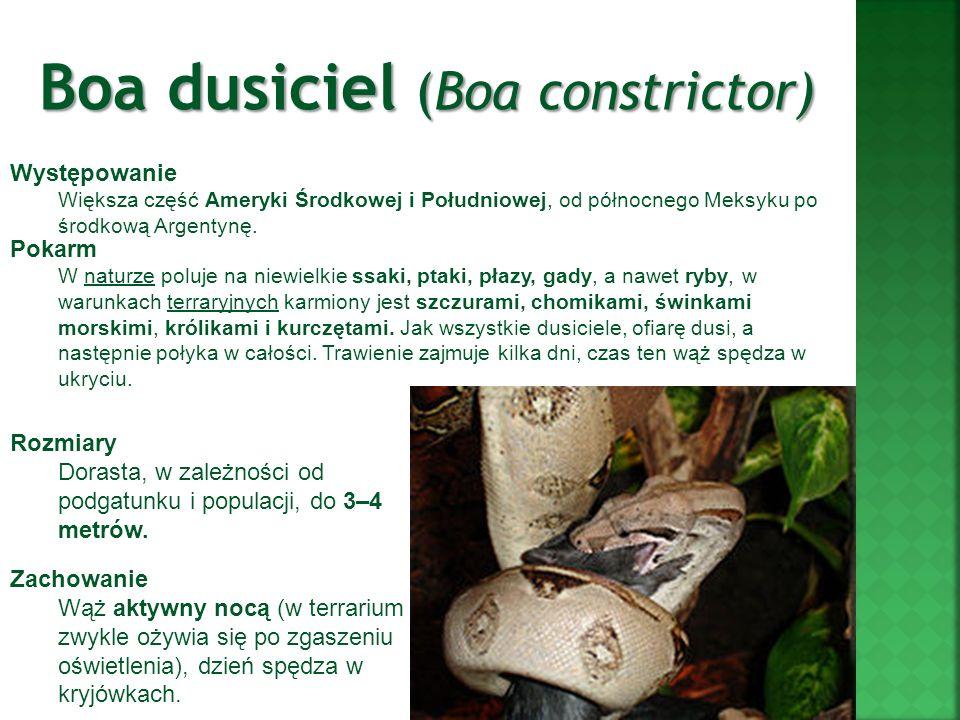 Boa dusiciel (Boa constrictor) Występowanie Większa część Ameryki Środkowej i Południowej, od północnego Meksyku po środkową Argentynę. Rozmiary Doras