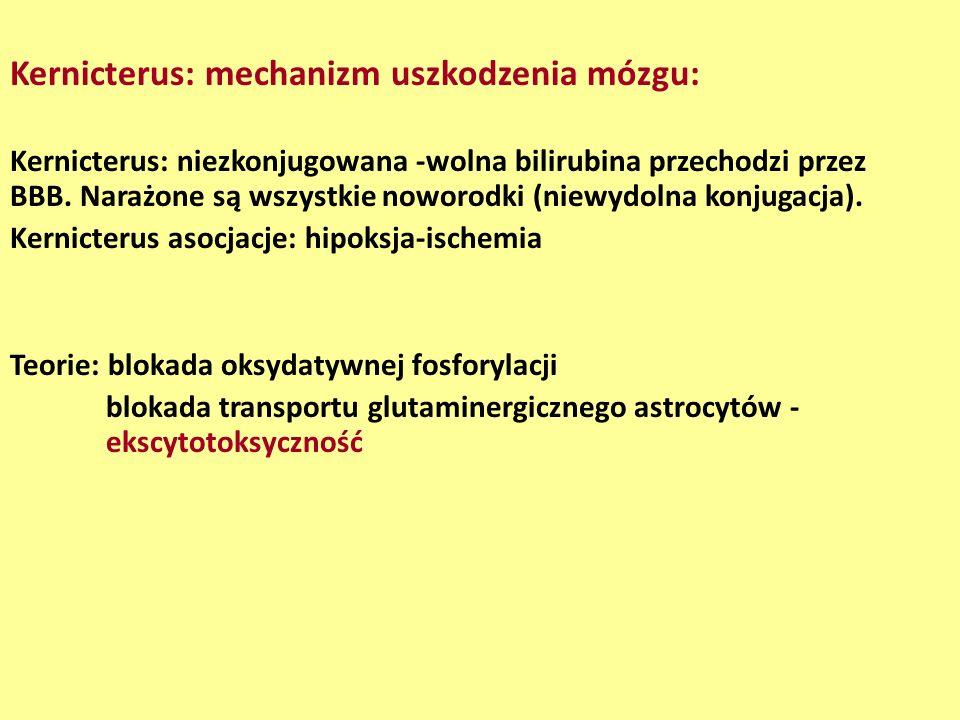 Kernicterus: mechanizm uszkodzenia mózgu: Kernicterus: niezkonjugowana -wolna bilirubina przechodzi przez BBB. Narażone są wszystkie noworodki (niewyd