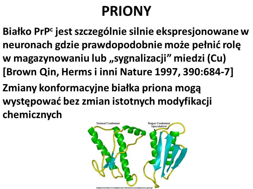 PRIONY Białko PrP c jest szczególnie silnie ekspresjonowane w neuronach gdzie prawdopodobnie może pełnić rolę w magazynowaniu lub sygnalizacji miedzi
