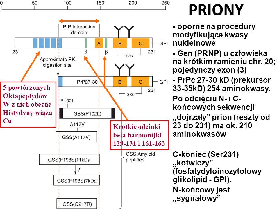 PRIONY - oporne na procedury modyfikujące kwasy nukleinowe - Gen (PRNP) u człowieka na krótkim ramieniu chr. 20; pojedynczy exon (3) - PrPc 27-30 kD (