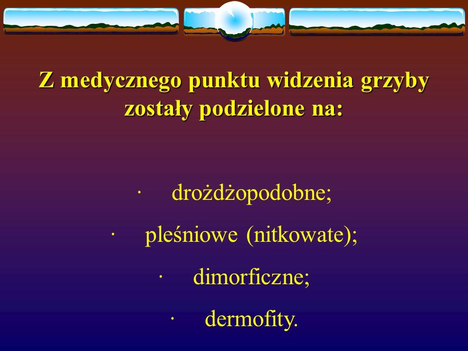 Z medycznego punktu widzenia grzyby zostały podzielone na: · drożdżopodobne; · pleśniowe (nitkowate); · dimorficzne; · dermofity.