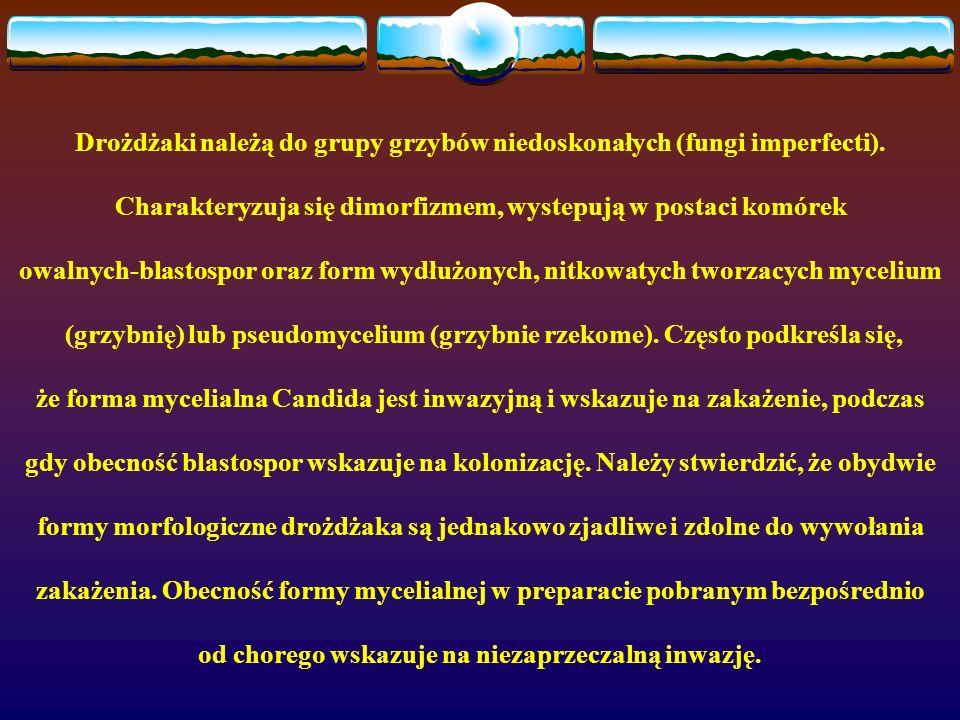 Drożdżaki należą do grupy grzybów niedoskonałych (fungi imperfecti). Charakteryzuja się dimorfizmem, wystepują w postaci komórek owalnych-blastospor o