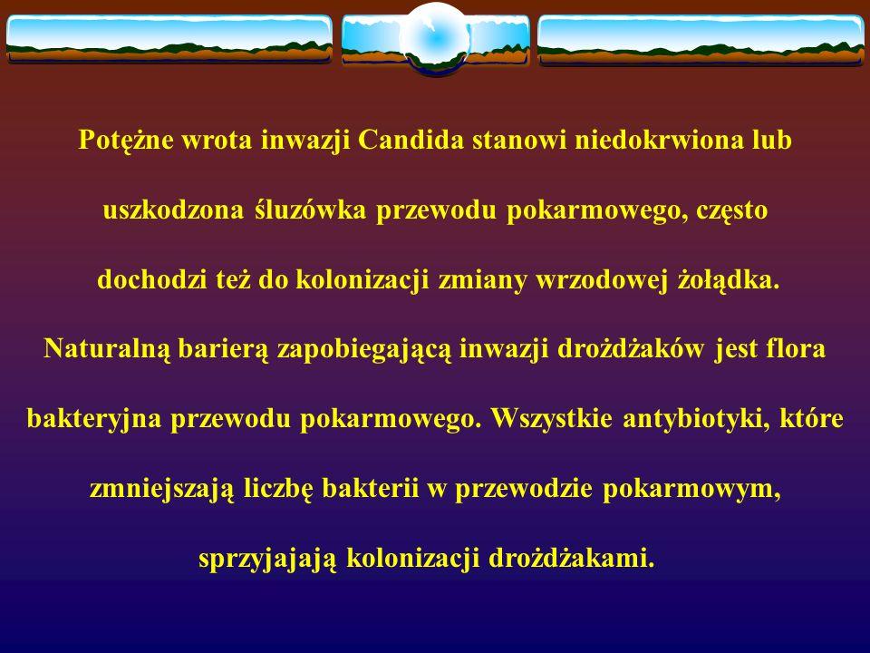 Potężne wrota inwazji Candida stanowi niedokrwiona lub uszkodzona śluzówka przewodu pokarmowego, często dochodzi też do kolonizacji zmiany wrzodowej ż