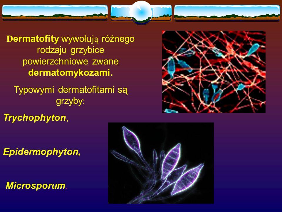 D ermatofity wywołu ją różnego rodzaju grzybice powierzchniowe zwane dermatomykozami. Typowymi dermatofitami są grzyby : Trychophyton, Epidermophyton,