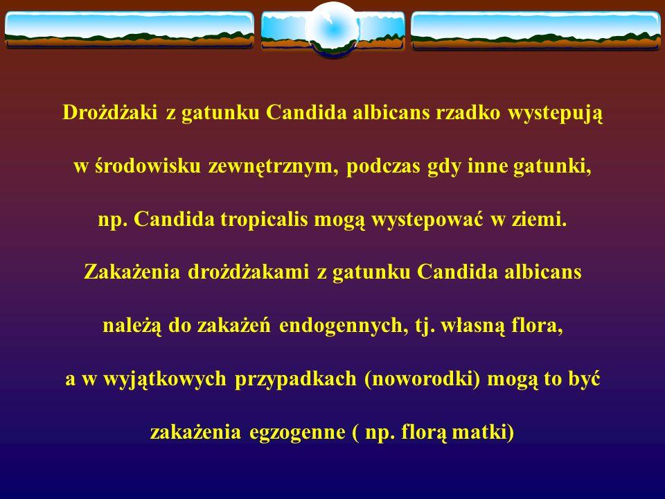 Drożdżaki z gatunku Candida albicans rzadko wystepują w środowisku zewnętrznym, podczas gdy inne gatunki, np. Candida tropicalis mogą wystepować w zie
