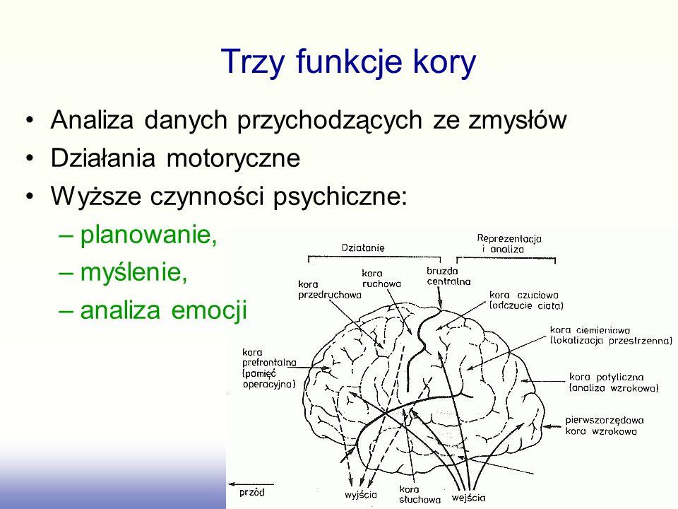 Analiza danych przychodzących ze zmysłów Działania motoryczne Wyższe czynności psychiczne: –planowanie, –myślenie, –analiza emocji Trzy funkcje kory