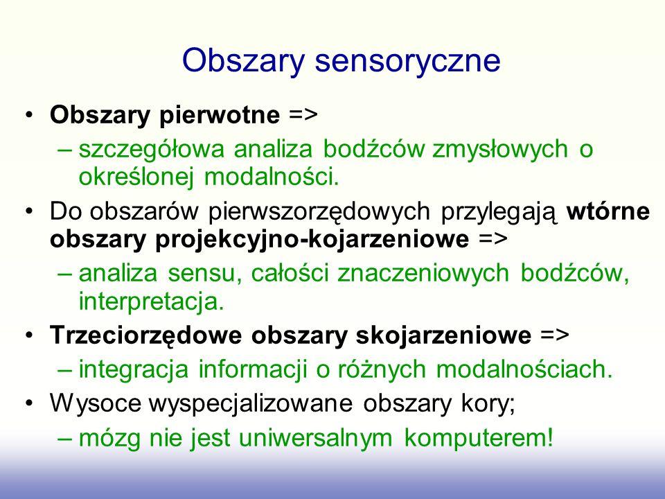 Obszary pierwotne => –szczegółowa analiza bodźców zmysłowych o określonej modalności. Do obszarów pierwszorzędowych przylegają wtórne obszary projekcy