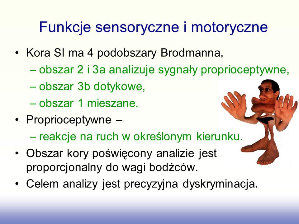 Kora SI ma 4 podobszary Brodmanna, –obszar 2 i 3a analizuje sygnały proprioceptywne, –obszar 3b dotykowe, –obszar 1 mieszane. Proprioceptywne – –reakc