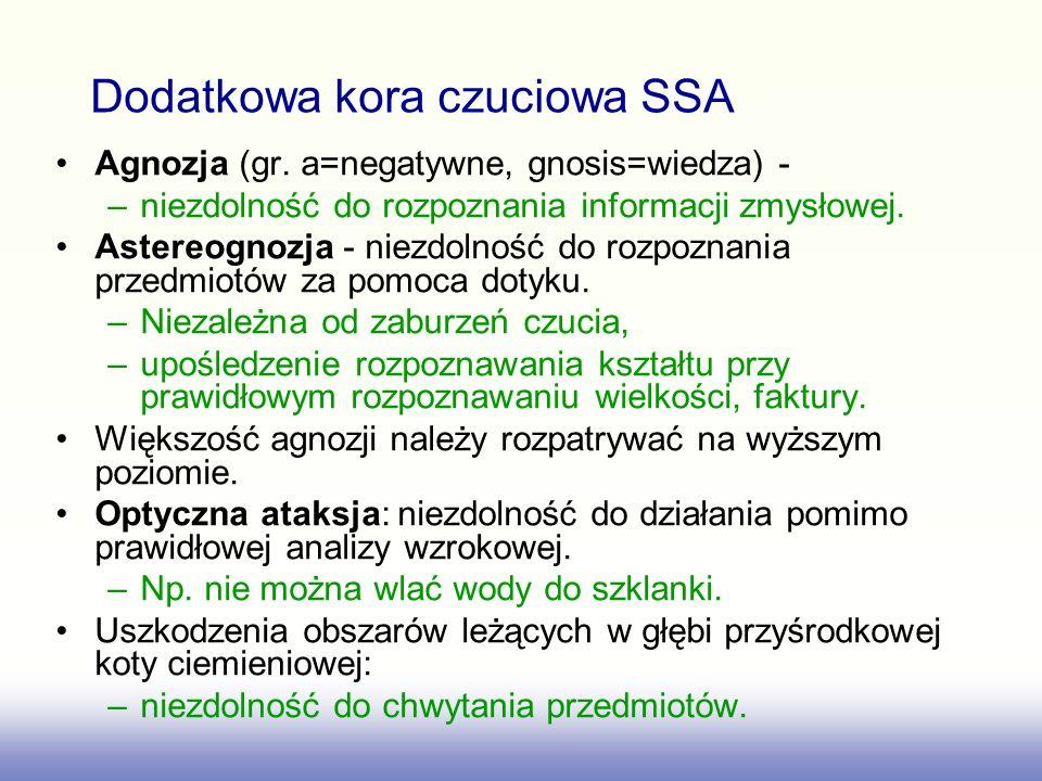 Agnozja (gr. a=negatywne, gnosis=wiedza) - –niezdolność do rozpoznania informacji zmysłowej. Astereognozja - niezdolność do rozpoznania przedmiotów za