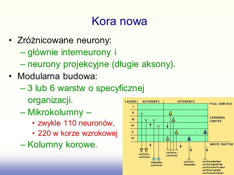Zróżnicowane neurony: –głównie interneurony i –neurony projekcyjne (długie aksony). Modularna budowa: –3 lub 6 warstw o specyficznej organizacji. –Mik