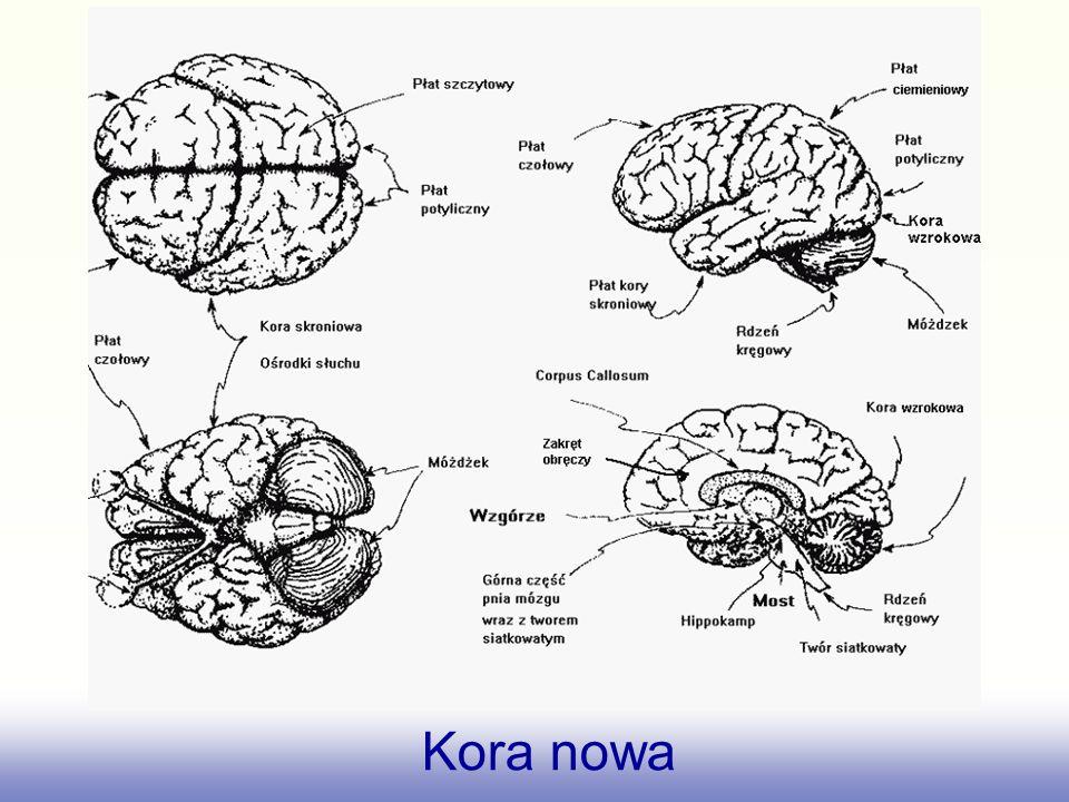 Najlepiej znane są mapy somatosensoryczne i ruchowe.