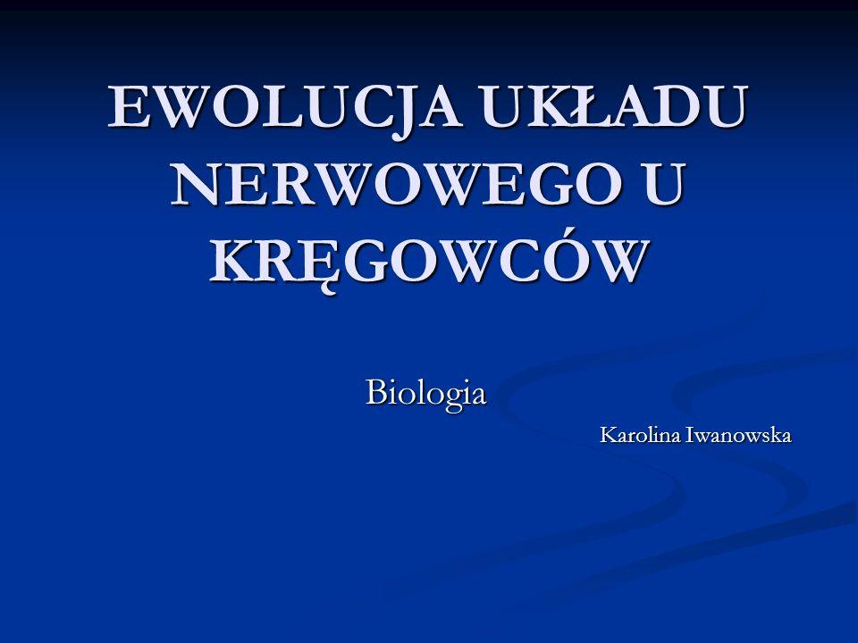EWOLUCJA UKŁADU NERWOWEGO U KRĘGOWCÓW Biologia Karolina Iwanowska