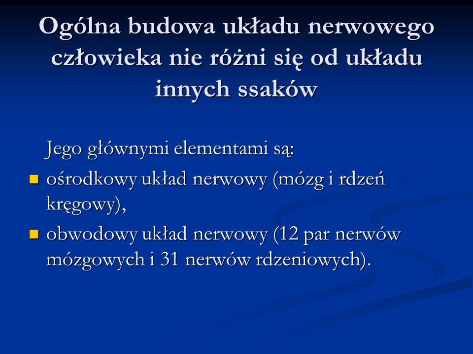 Ogólna budowa układu nerwowego człowieka nie różni się od układu innych ssaków Jego głównymi elementami są: ośrodkowy układ nerwowy (mózg i rdzeń kręgowy), ośrodkowy układ nerwowy (mózg i rdzeń kręgowy), obwodowy układ nerwowy (12 par nerwów mózgowych i 31 nerwów rdzeniowych).