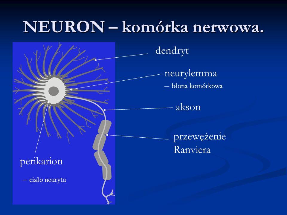 NEURON – komórka nerwowa.