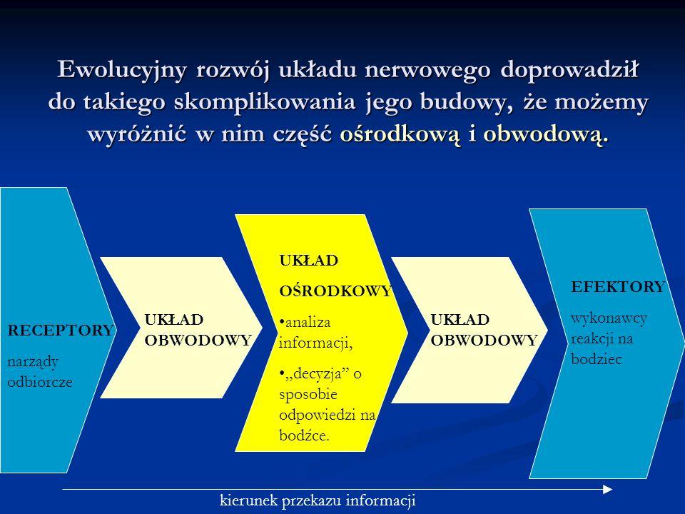 Ewolucyjny rozwój układu nerwowego doprowadził do takiego skomplikowania jego budowy, że możemy wyróżnić w nim część ośrodkową i obwodową.