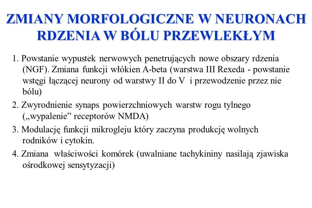 ZMIANY MORFOLOGICZNE W NEURONACH RDZENIA W BÓLU PRZEWLEKŁYM 1. Powstanie wypustek nerwowych penetrujących nowe obszary rdzenia (NGF). Zmiana funkcji w