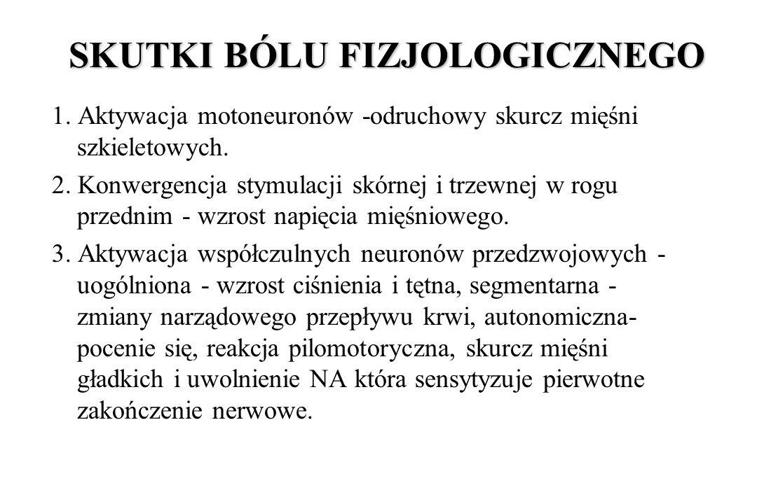 SKUTKI BÓLU FIZJOLOGICZNEGO 1. Aktywacja motoneuronów -odruchowy skurcz mięśni szkieletowych. 2. Konwergencja stymulacji skórnej i trzewnej w rogu prz