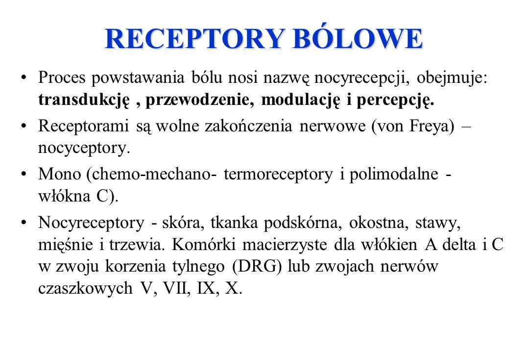 RECEPTORY BÓLOWE Proces powstawania bólu nosi nazwę nocyrecepcji, obejmuje: transdukcję, przewodzenie, modulację i percepcję. Receptorami są wolne zak