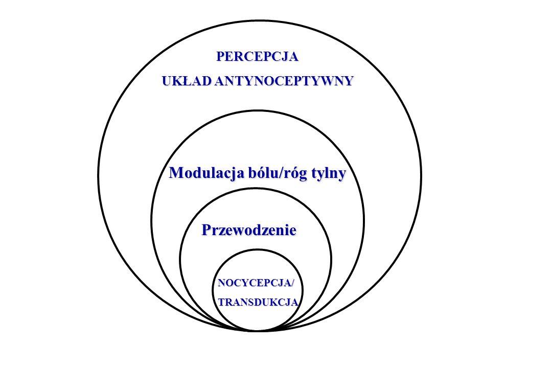 ANATOMICZNA KLASYFIKACJA BÓLU (1) 1.RECEPTOROWY 1.1Powierzchniowy – naturalny fizjologiczny ból ochronny, (skóra, śluzówki, epikrytyczny A delta, protopatyczny C) 1.2Głęboki patologiczny – naczyniowy, kostno-stawowy, mięśniowy, narządowy, zależny od lokalizacji receptorów 1.2.1Naczyniowy – receptory dużych naczyń tętniczych i żylnych: pulsujące bóle głowy 1.2.2Kostno - stawowy – głównie z receptorów torebki stawowych i okostnej 1.2.3Mięśniowe – metabolity – zakwaszenie, obciążenie zmęczenie, wysiłek, ischemia + wysiłek = choroba wieńcowa 1.2.4Narządowe – dotyczy narządów miąższowych (wątroba, nerka), unerwienie bólowe tylko w otrzewnej pokrywającej te narządy, bodźce mechaniczne i chemiczne ( kolka żółciowa, nerkowa, jelitowa) Terapia – niesterydowe leki przeciwzapalne, przeciwbólowe, znieczulenie powierzchniowe