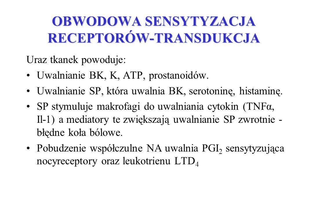 OBWODOWA SENSYTYZACJA RECEPTORÓW-TRANSDUKCJA Uraz tkanek powoduje: Uwalnianie BK, K, ATP, prostanoidów. Uwalnianie SP, która uwalnia BK, serotoninę, h