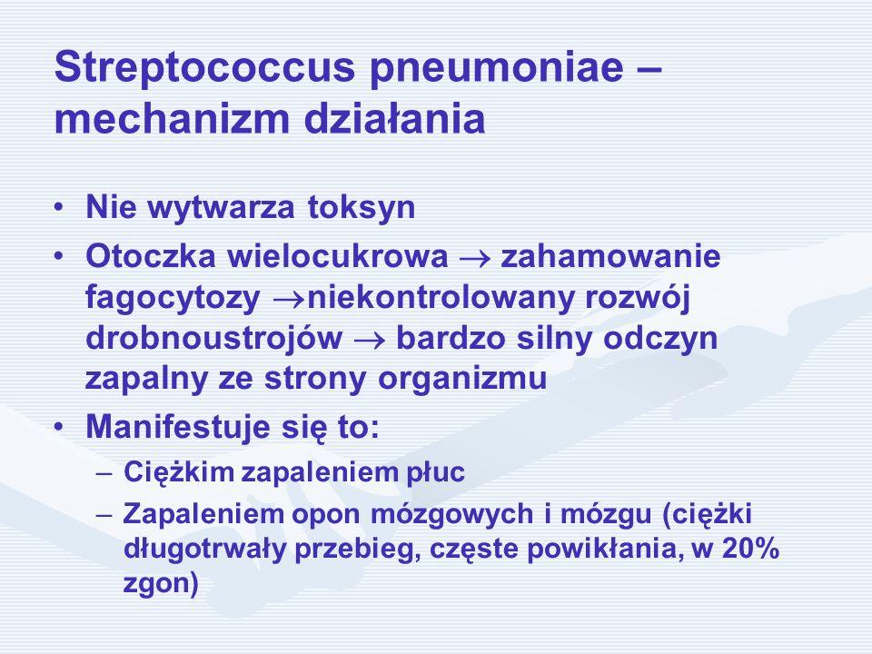 Streptococcus pneumoniae – mechanizm działania Nie wytwarza toksyn Otoczka wielocukrowa zahamowanie fagocytozy niekontrolowany rozwój drobnoustrojów b