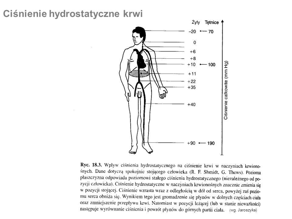 Ciśnienie hydrostatyczne krwi ( wg. Jaroszyka)