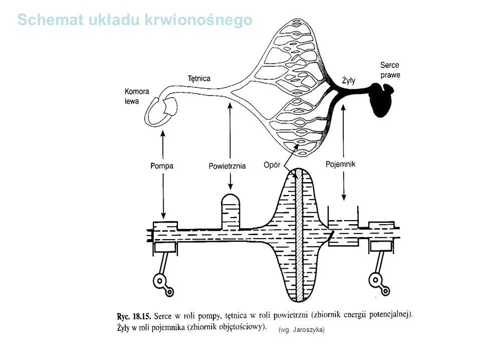 Schemat układu krwionośnego (wg. Jaroszyka)
