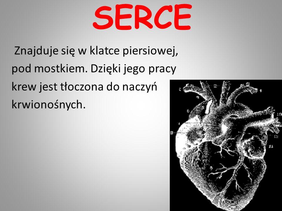 SERCE Znajduje się w klatce piersiowej, pod mostkiem. Dzięki jego pracy krew jest tłoczona do naczyń krwionośnych.