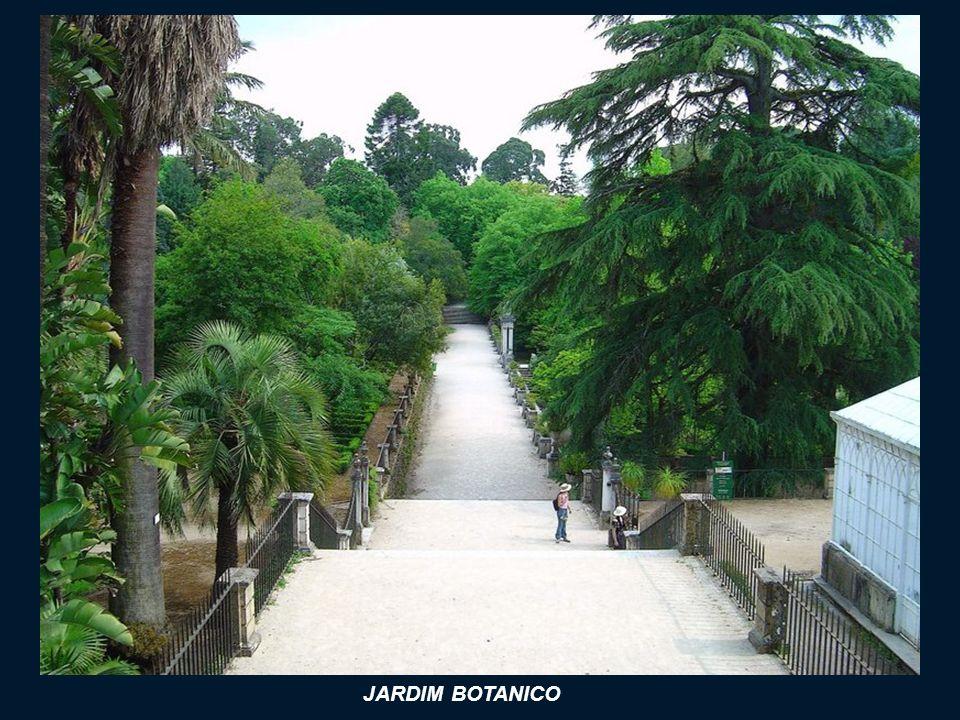 JARDIM BOTANICO (Ogród Botaniczny ) Jest to największy ogród botaniczny w Portugalii. Powstał w XVIII wieku, kiedy za sprawą Markiza de Pombal, wprowa